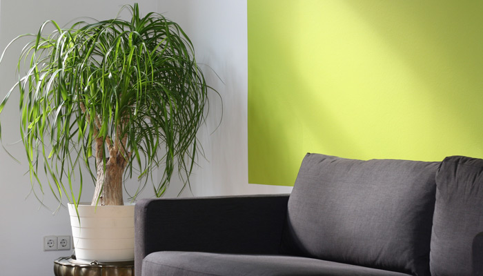 A clean home with a clean houseplant