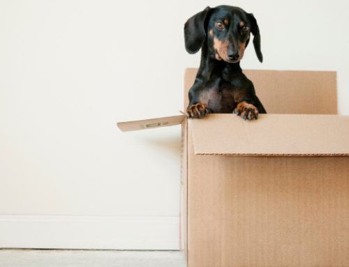 Just Moved Into Your New House? Here's How to Make It Feel Like Home