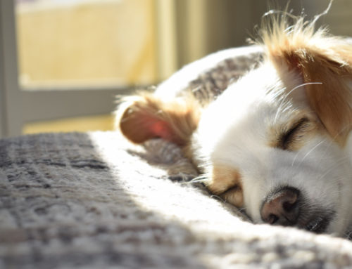 5 Tricks for Cleaning Up Dog Hair In No Time