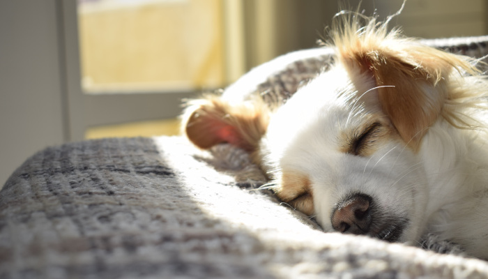 How to Clean Dog Hair Quickly