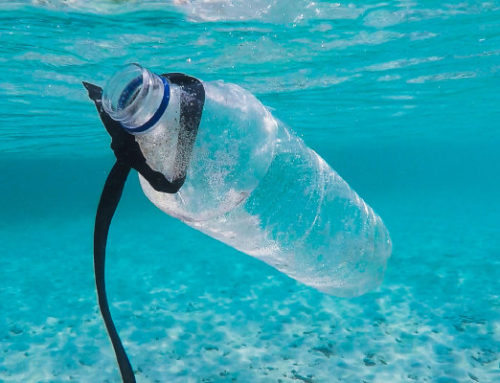 The Perils of Plastic: What to Know for 2021